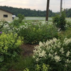 6月の庭  シェードガーデン
