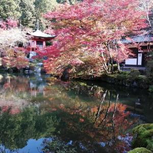 京の紅葉  醍醐寺