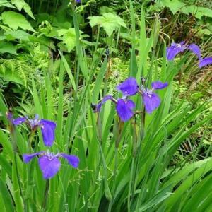 京都府立植物園 5 なからぎの森