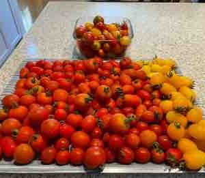 自家製トマトソース作り