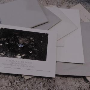 時間を超えて届いた一通の手紙。それは昭和の時代の大切なたからもの。・・・のお話。
