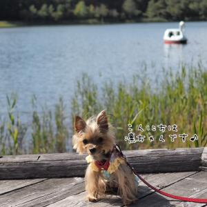 湖畔を散策♪