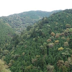 続22.魚金山(921m)