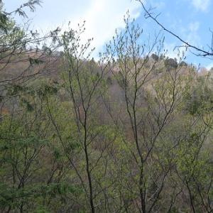 続90.簗谷山(1,214m)