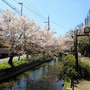 カフェ「oz」& 八尾おゆば 足湯&桜のトンネル