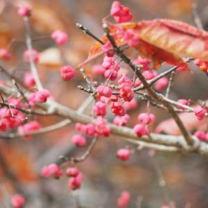 秋のピンク色