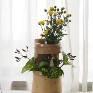 小菊と竹の花入れ