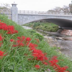 橋と・(南浅川曼珠沙華いっとき逍遥)・・・Vol.2430