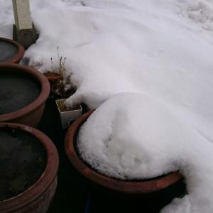 睡蓮鉢は冬景色