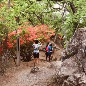 飯能アルプス奥武蔵丸山トレイルラン【4】高畑山→古御岳→伊豆ヶ岳  3歳児の保護者の気持ちで。