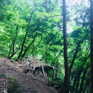【山行】ようやく出会えた千本ツツジ 3 雲取山ー千本ツツジー奥多摩駅  雲取山まで