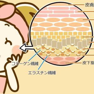 究極の節約化粧品?!幹細胞コスメ!!