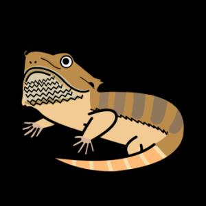 フトアゴヒゲトカゲ|タフなアゴヒゲはペット向き