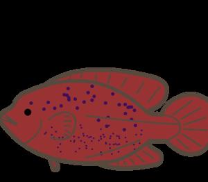 イレズミコンニャクアジ|味はともかくコンニャクみたいな魚