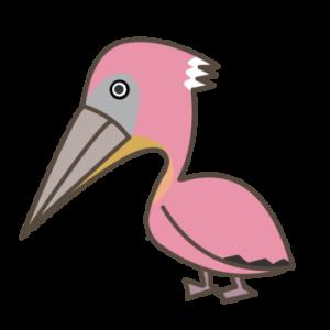 モモイロペリカン 実は白い?喉袋は超繊細で器用な鳥