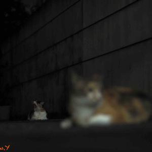 夜猫・・・