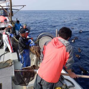 今年2回目のタカエビ漁乗船