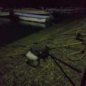 夜間採集でテンジクダイ科稚魚