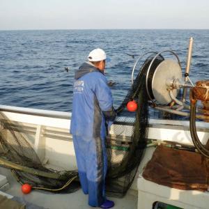 今年3度目の深海エビ漁