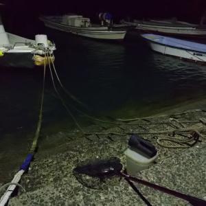 今年初の夜間採集