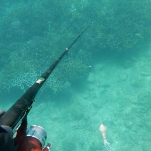 リベンジ 今年初の素潜り釣り採集