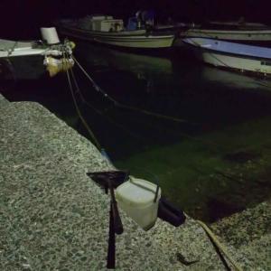 夜間採集でコショウダイ幼魚