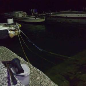 夜間採集でヒメジ科稚魚