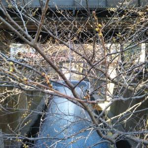 4月11日(木):カラーリアム体験会