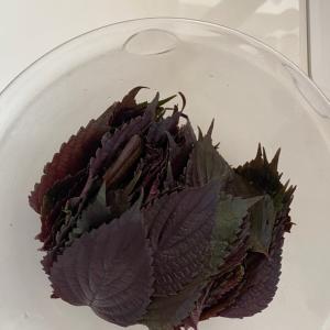 紫蘇ジュース作り〜(^^)