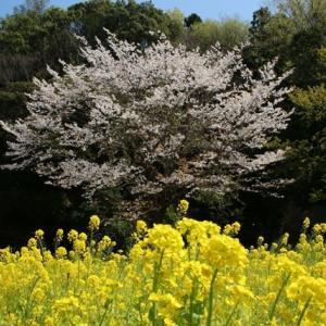 散歩日和 松戸21世紀の森 Ⅱ