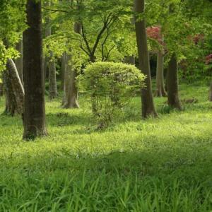 朝散歩 祖光院と育苗圃 Ⅱ