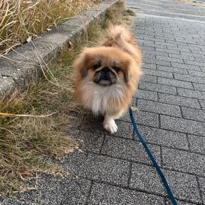 ♡♡お散歩練習 1日目♡♡