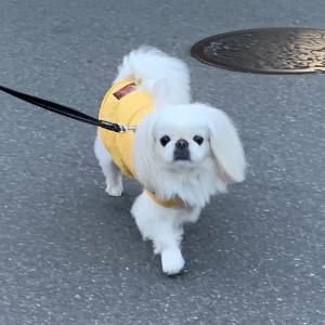 ♡♡お散歩デート♡♡