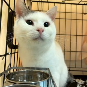 「飼い主のいない猫基金」保護猫譲渡会終了しました☆