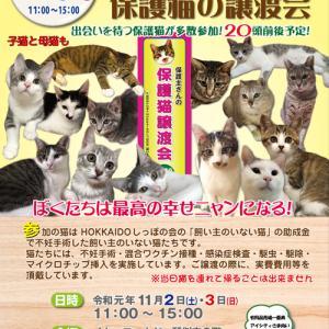 来月11月2日(土)、3日(日)は、飼い主のいない猫基金保護猫譲渡会★