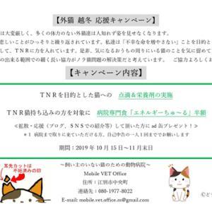 Mobile VET Office「外猫越冬応援キャンペーン」を実施