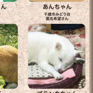 生活情報紙「ちゃんと」に、卒業犬のブランカちゃんが掲載されました!