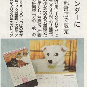 11月17日付北海道新聞朝刊 保護した犬猫 カレンダーに