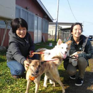 卒業犬の音ちゃん(旧:ポカリ)と、結ちゃん(旧:柚花)が遊びに来てくれました♫