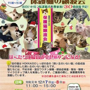 12/7.8 第8回「飼い主のいない猫基金」保護猫譲渡会開催☆