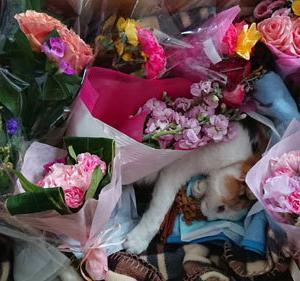 今までありがとう!美奈子が虹の橋へと旅立ちました・・・
