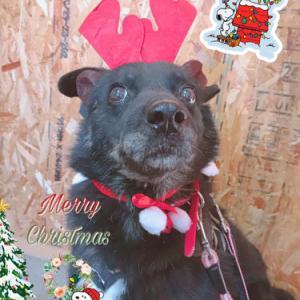 ☆*:;;;:*☆Merry Christmas☆*:;;;:*☆スラッシュサンタより☆;:*:;☆;:*:;☆