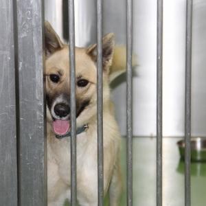1月16日(木)の札幌市動物管理センター福移支所は