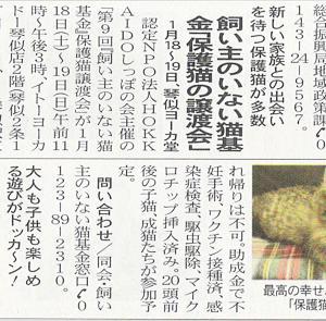 今週末 1/18・19 ヨーカドー琴似店 第9回「飼い主のいない猫基金」保護猫譲渡会