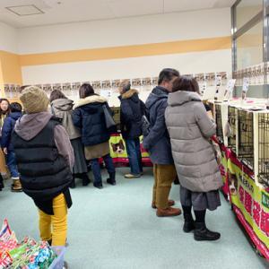 明日19日(日)もヨーカドー琴似店 第9回「飼い主のいない猫基金」保護猫譲渡会