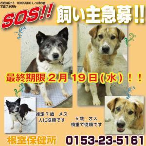2月17日、根室保健所より犬1頭引き取しました!
