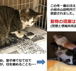 後志総合振興局から遺棄された猫のSOS!