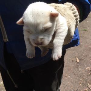5/28 オホーツク管内の滝上町から野良子犬6頭保護しました!