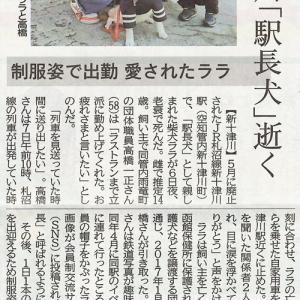 6/8北海道新聞朝刊 しっぽ卒業犬ララ 新十津川町「駅長犬」逝く