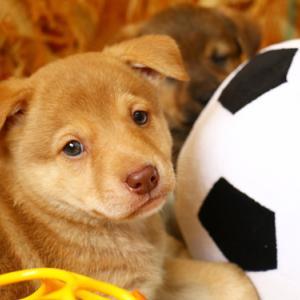 繁殖業等に「国際的な動物福祉にかなった数値規制」を!